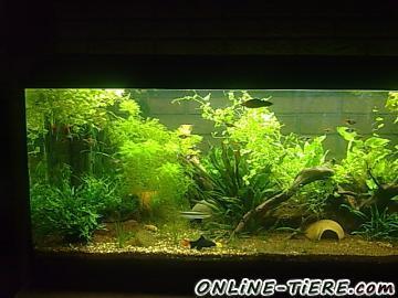 180l aquarium komplett mit fischen pflanzen top und 66978 for Teichfische ohne pumpe