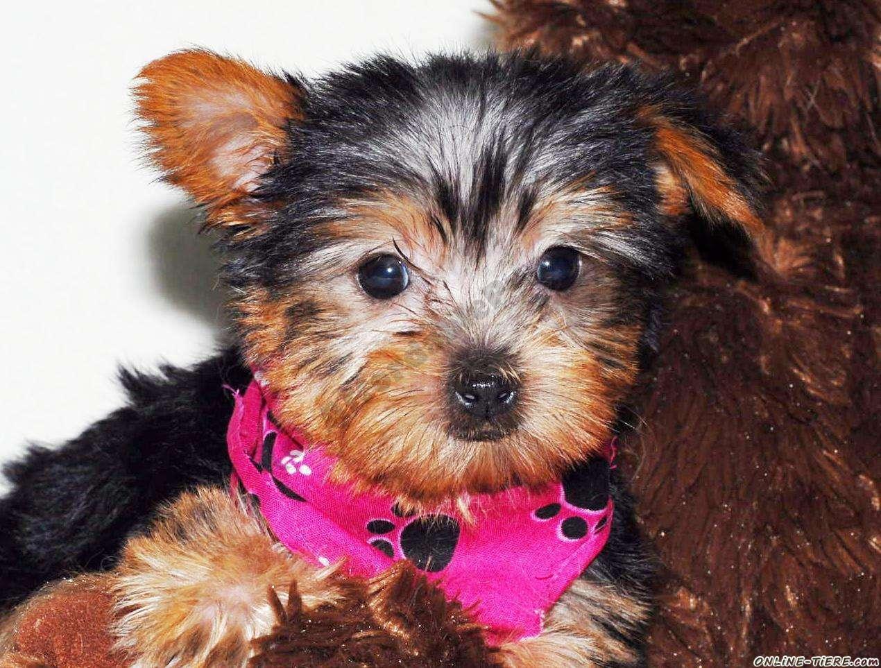 Hofer Gartenmobel Rattan : Kein Inserat in Hunde Hunde zu verkaufen 717 Kleinanzeigen
