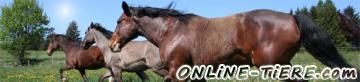 Biete Für Alle Pferde