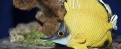 Fische abzugeben, zu verkaufen oder zu verschenken