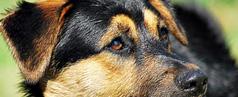 Hunde abzugeben, zu verkaufen oder zu verschenken