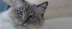 Katzen abzugeben, zu verkaufen oder zu verschenken