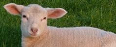 Nutztiere abzugeben, zu verkaufen oder zu verschenken