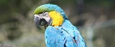 Vögel abzugeben, zu verkaufen oder zu verschenken