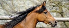 Pferde abzugeben, zu verkaufen oder zu verschenken