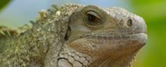 Reptilien abzugeben, zu verkaufen oder zu verschenken