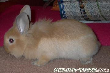 Biete Kaninchen