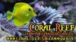 Biete Korallen, Korallenableger, Meerwasser
