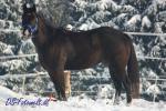 Biete Quarter Horse